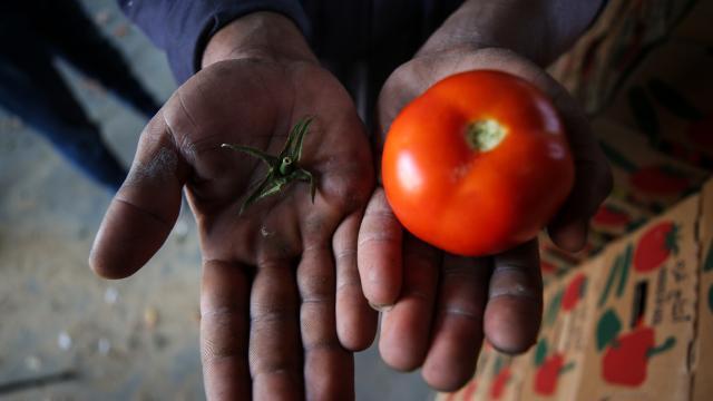 İsrail'den Gazzeli çiftçi ve tüccarlara yeni şart