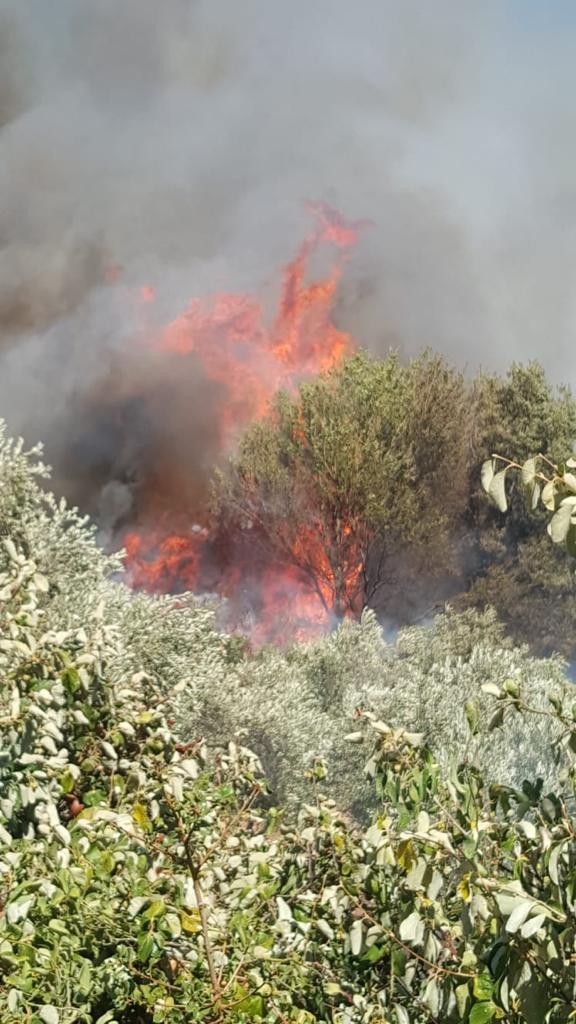 Zeytin bahçelerinde çıkan yangın korkuttu